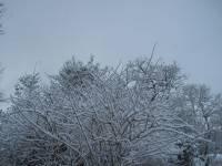 Highlight for Album: Late-December 2009 Snow