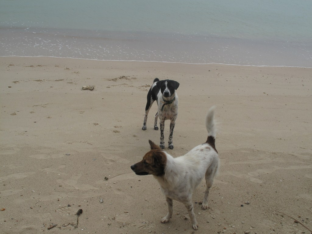 The Doggies on the Beach