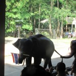 The Thai Elephants - Welcome Ceremony