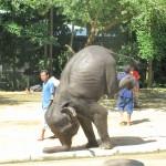 Elephant Hand-Stand