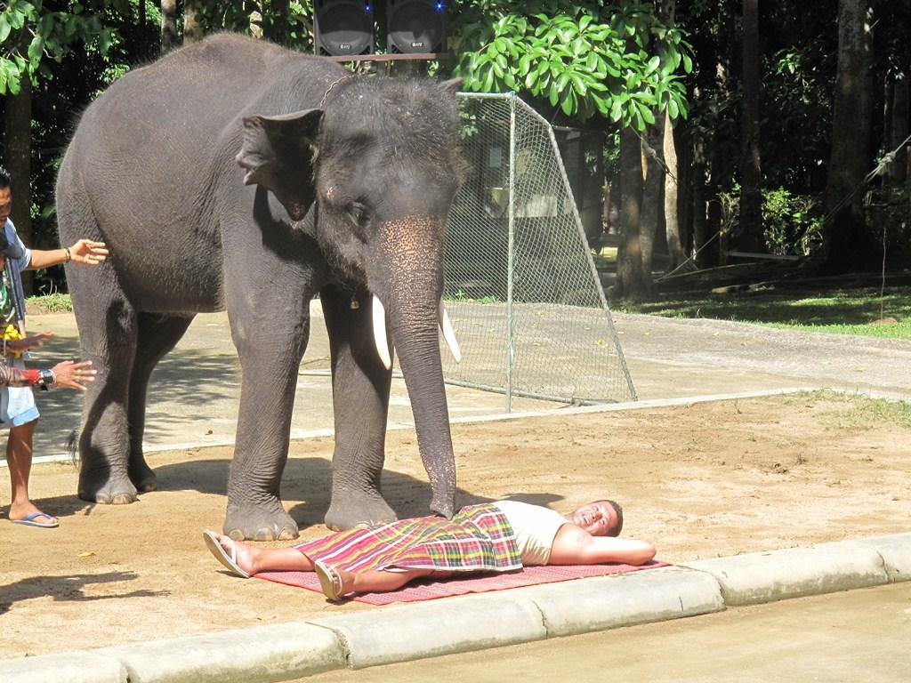 Elephant Sucking!