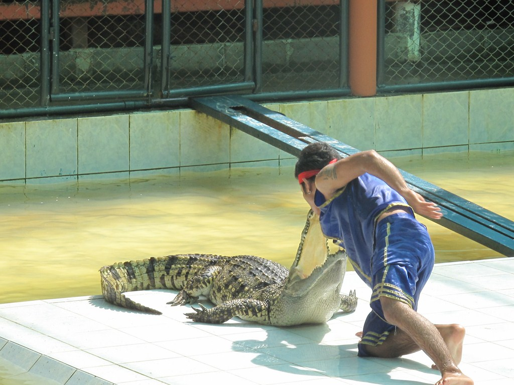 Showing Affection to the Croc