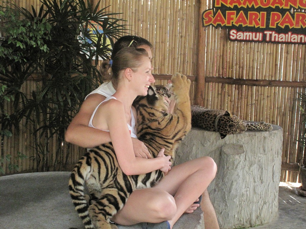 The Baby Tiger Cub - and companions :)