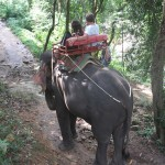 An enjoyable elephant trek