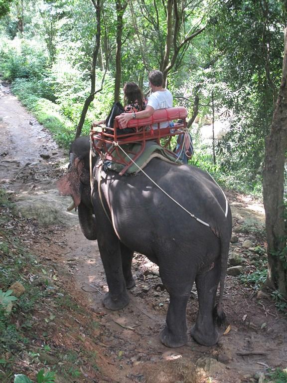 An enjoyable elephant trek
