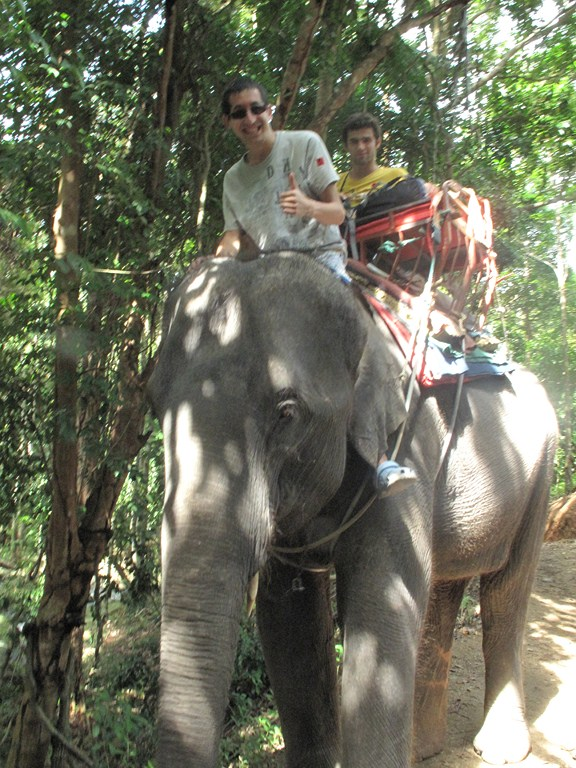 Looking Cool on the Elephant