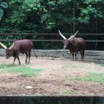 Bull Galore