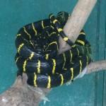 Nice snake - eek!