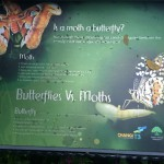 Butterflies vs Moths