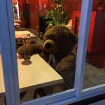 Cuddly Bear Drinking a Beer
